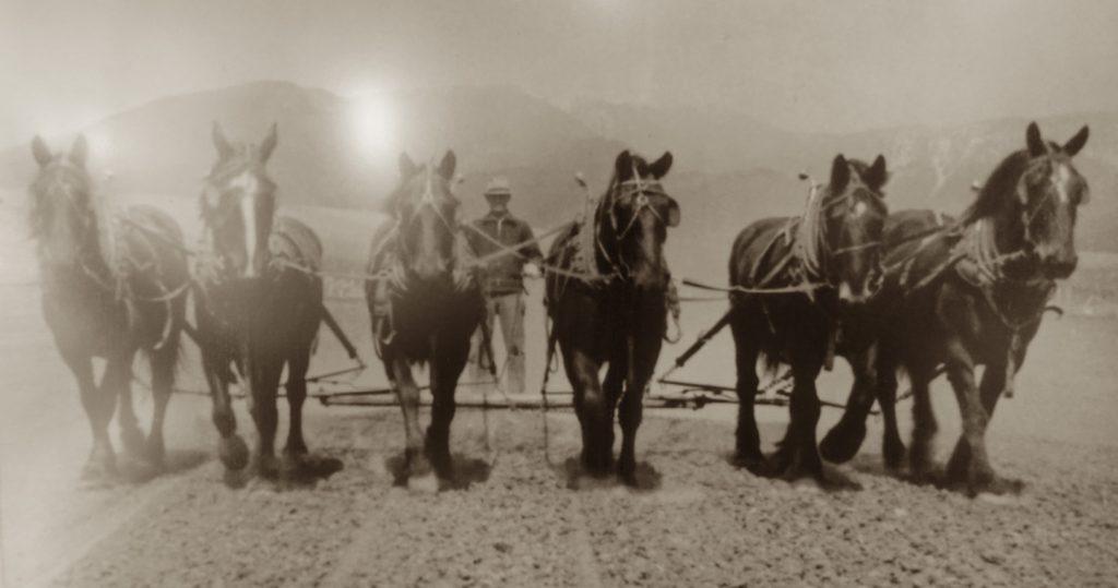 Haugland Family Horse Plow